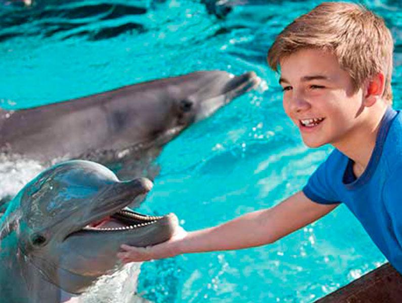 amo-golfinhos-orlando-onde-encontro