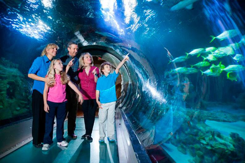 orlando-sea-life-aquarium-como-é